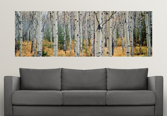 Poster-Print-Wall-Art-entitled-Aspen-trees-in-a-forest-Alberta-Canada