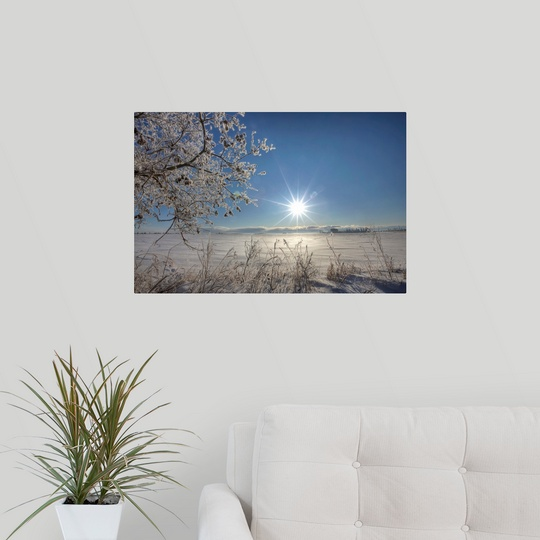 Poster-Print-Wall-Art-entitled-Frost-Covered-Trees-On-Winter-Morning-Alberta