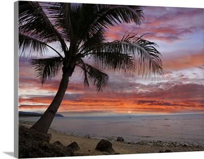 Coconut Palm (Cocos nucifera) at sunset near Dimiao, Bohol Island, Philippines