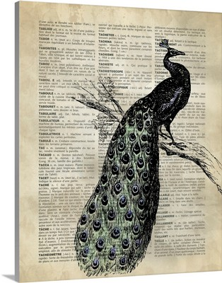 Vintage Dictionary Art: Peacock