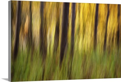 Fall color with trees blurred