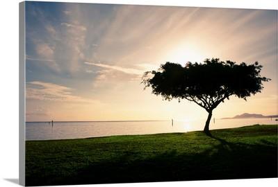 Hawaii, Oahu, Hawaii Kai, Silhouetted Tree At Maunalua Bay Park