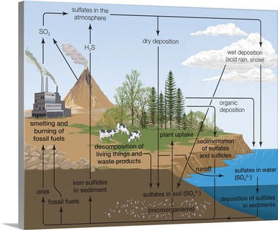 Sulfur Cycle, Biosphere, Atmosphere, Earth Sciences