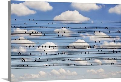 Cantus Arcticus - Concerto For Birds