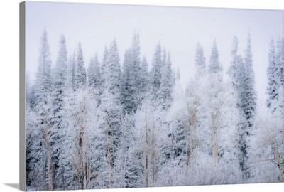 Wintery Landscape In Colorado Rockies, Colorado Rockies