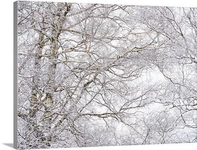 Winter Hush lll