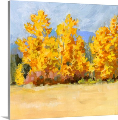Golden Aspen Trees I