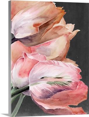 Pastel Parrot Tulips IV