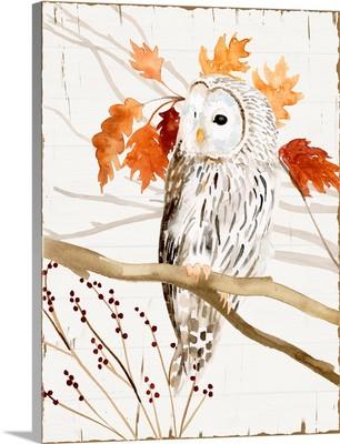 Harvest Owl II