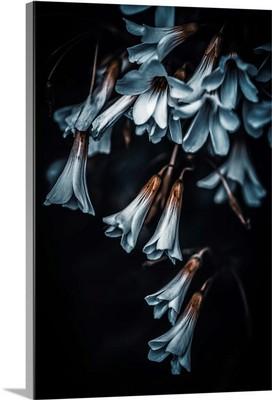Floral Cones