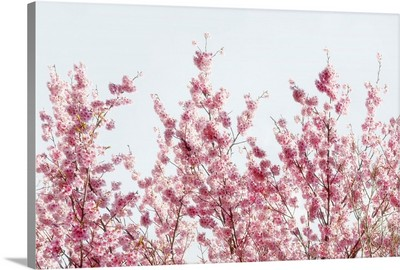 Japan Rising Sun Collection - Pink Sakura Tree