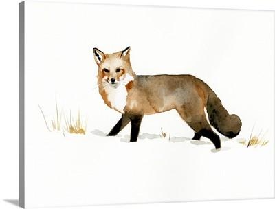 Winter Fox II