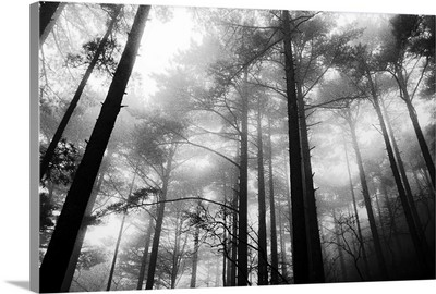 Trees and Fog in the Yellow Mountains, Huangshan, China